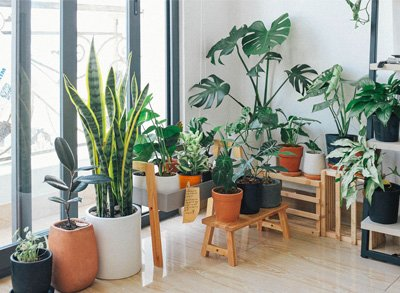 The 10 best plants to purify the air according to NASA